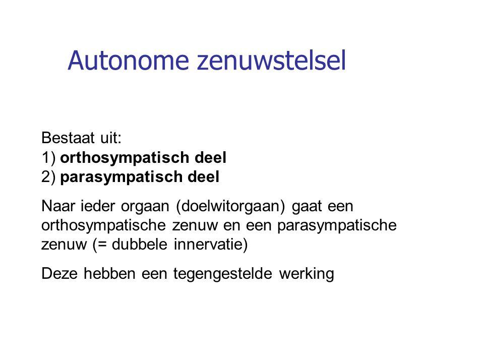 Autonome zenuwstelsel Bestaat uit: 1) orthosympatisch deel 2) parasympatisch deel Naar ieder orgaan (doelwitorgaan) gaat een orthosympatische zenuw en