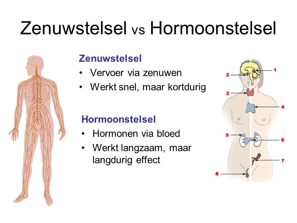 Zenuwstelsel vs Hormoonstelsel Zenuwstelsel Vervoer via zenuwen Werkt snel, maar kortdurig Hormoonstelsel Hormonen via bloed Werkt langzaam, maar lang