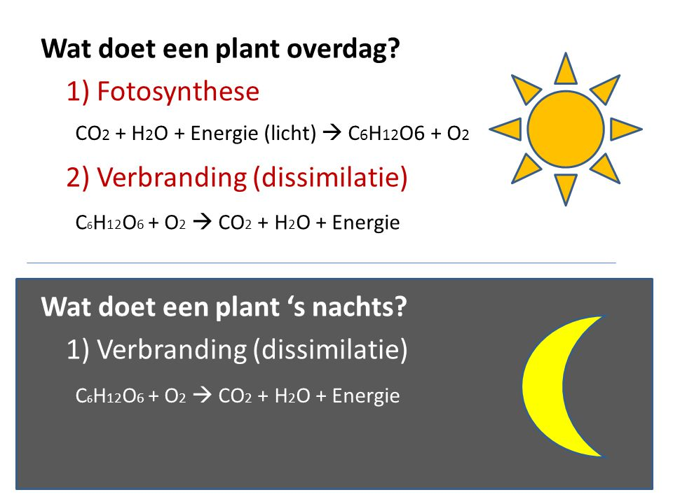 Wat doet een plant overdag? 1) Fotosynthese 2) Verbranding (dissimilatie) Wat doet een plant 's nachts? 1) Verbranding (dissimilatie) CO 2 + H 2 O + E