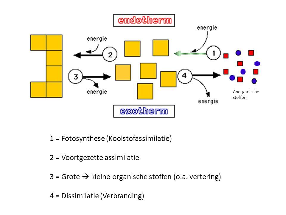 1 = Fotosynthese (Koolstofassimilatie) 2 = Voortgezette assimilatie 3 = Grote  kleine organische stoffen (o.a. vertering) 4 = Dissimilatie (Verbrandi