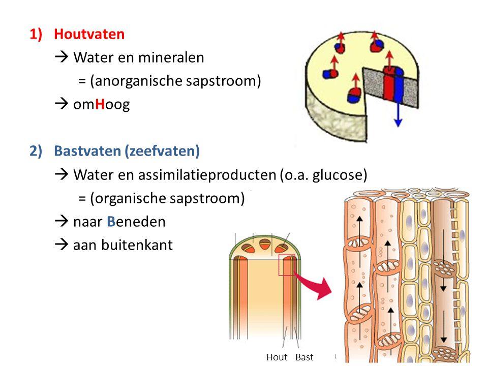 1)Houtvaten  Water en mineralen = (anorganische sapstroom)  omHoog 2)Bastvaten (zeefvaten)  Water en assimilatieproducten (o.a. glucose) = (organis