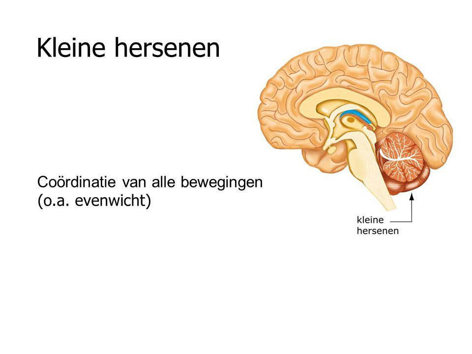 Kleine hersenen Coördinatie van alle bewegingen (o.a. evenwicht)