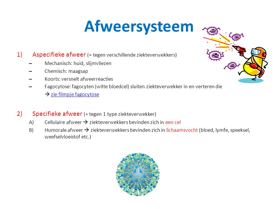 Afweersysteem 1)Aspecifieke afweer (= tegen verschillende ziekteverwekkers) – Mechanisch: huid, slijmvliezen – Chemisch: maagsap – Koorts: versnelt afweerreacties – Fagocytose: fagocyten (witte bloedcel) sluiten ziekteverwekker in en verteren die  zie filmpje fagocytosezie filmpje fagocytose 2) Specifieke afweer (= tegen 1 type ziekteverwekker) A)Cellulaire afweer  ziekteverwekkers bevinden zich in een cel B)Humorale afweer  ziekteverwekkers bevinden zich in lichaamsvocht (bloed, lymfe, speeksel, weefselvloeistof etc.)