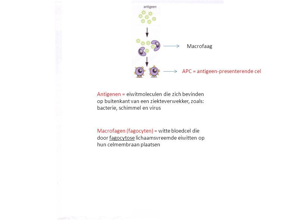Antigenen = eiwitmoleculen die zich bevinden op buitenkant van een ziekteverwekker, zoals: bacterie, schimmel en virus Macrofagen (fagocyten) = witte bloedcel die door fagocytose lichaamsvreemde eiwitten op hun celmembraan plaatsen APC = antigeen-presenterende cel Macrofaag