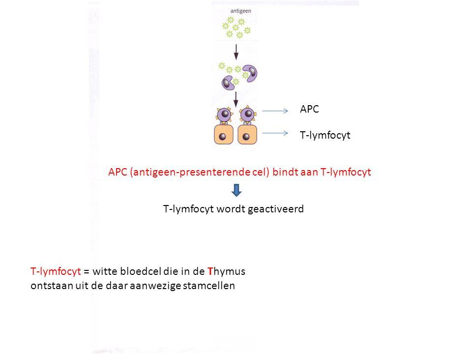 APC (antigeen-presenterende cel) bindt aan T-lymfocyt APC T-lymfocyt T-lymfocyt = witte bloedcel die in de Thymus ontstaan uit de daar aanwezige stamc