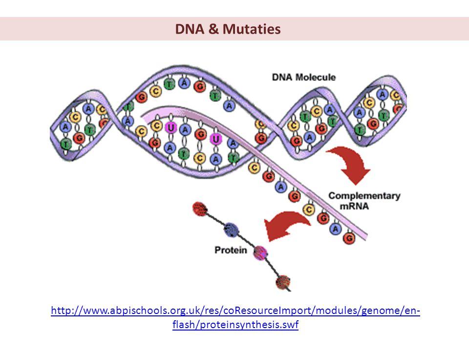 Mutaties = plotselinge verandering van het genotype, oftewel de DNA-volgorde
