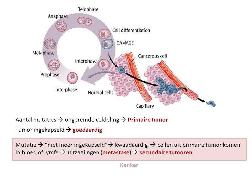 """Aantal mutaties  ongeremde celdeling  Primaire tumor Tumor ingekapseld  goedaardig Mutatie  """"niet meer ingekapseld""""  kwaadaardig  cellen uit pri"""