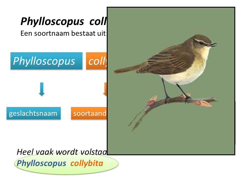 Een soortnaam bestaat uit: Phylloscopus collybita (Vieillot, 1817) Het jaar waarin de soort voor het eerst is beschreven geslachtsnaam soortaanduiding De eerste beschrijver van de soort Heel vaak wordt volstaan met de eerste twee delen: Phylloscopus collybita