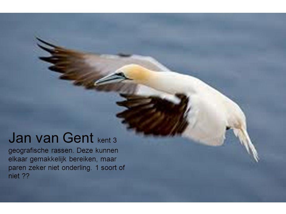 Jan van Gent kent 3 geografische rassen.