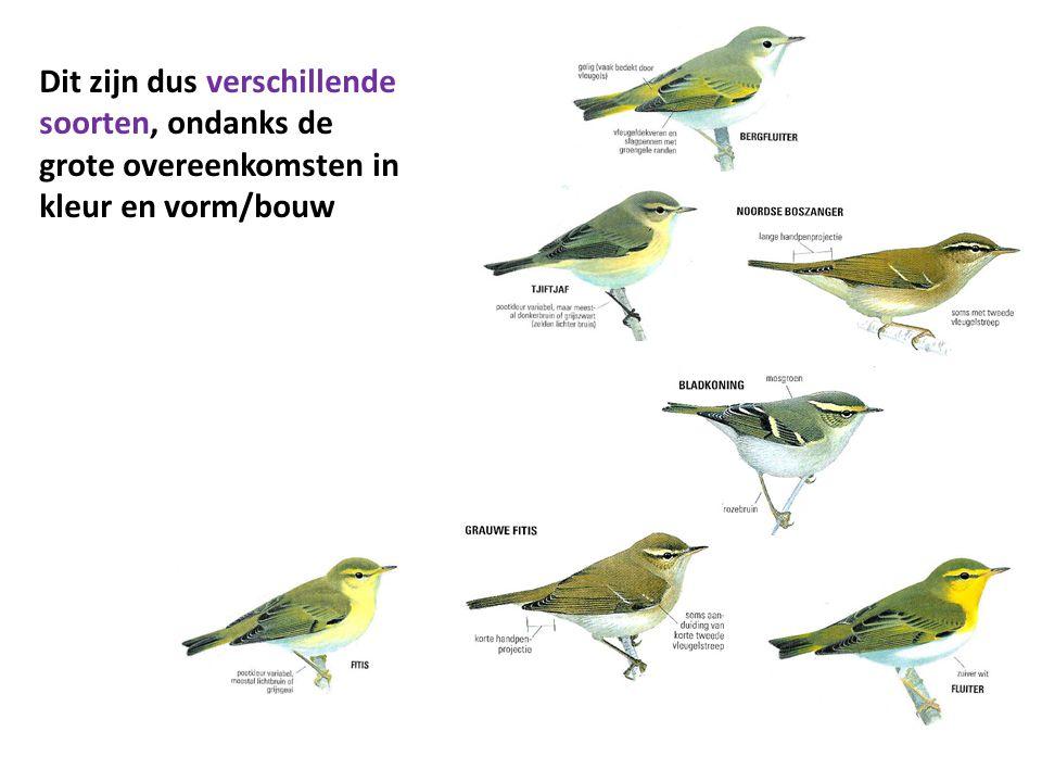 En dit zijn dus geen verschillende diersoorten: 1 soort, met veel variëteiten, rassen zelfs