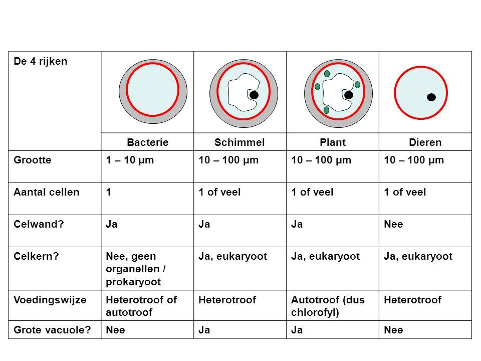 De 4 rijken BacterieSchimmelPlantDieren Grootte1 – 10 μm10 – 100 μm Aantal cellen11 of veel Celwand?Ja Nee Celkern?Nee, geen organellen / prokaryoot Ja, eukaryoot VoedingswijzeHeterotroof of autotroof HeterotroofAutotroof (dus chlorofyl) Heterotroof Grote vacuole?NeeJa Nee