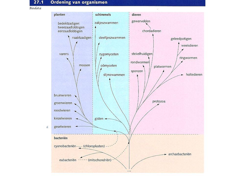 Geen celwand Celkern (=Eukaryoot) Geen bladgroenkorrels Eencellig of veelcellig BacteriënSchimmelsPlantenDieren wangslijmvlies amoebe