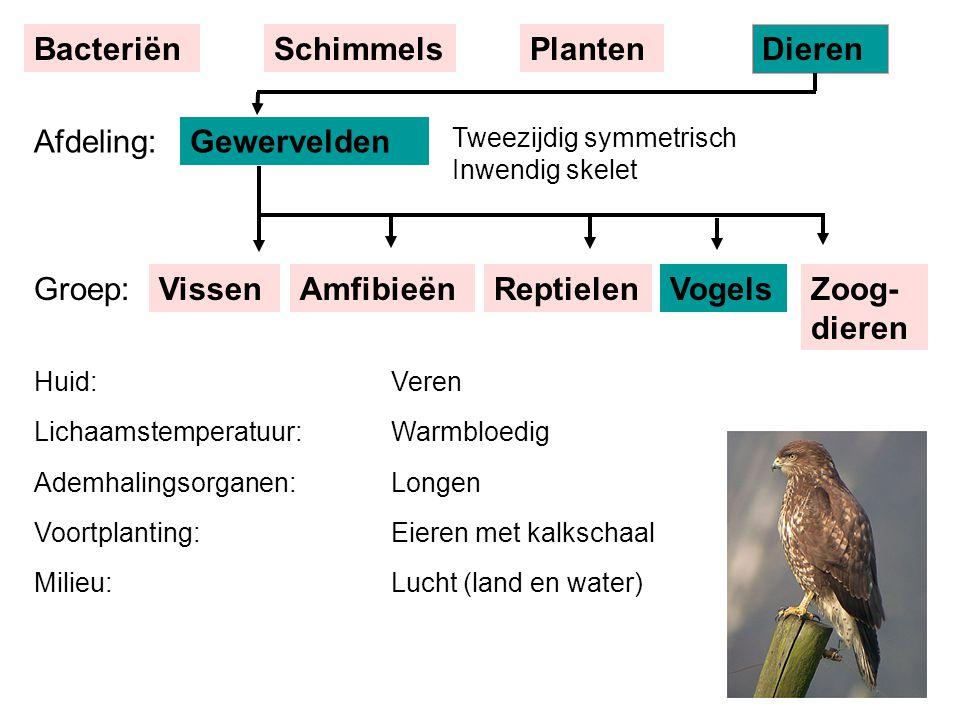 VissenReptielenAmfibieënVogels Tweezijdig symmetrisch Inwendig skelet Gewervelden BacteriënSchimmelsPlanten Dieren Afdeling: Groep:Zoog- dieren Huid: Lichaamstemperatuur: Ademhalingsorganen: Voortplanting: Milieu: Veren Warmbloedig Longen Eieren met kalkschaal Lucht (land en water)