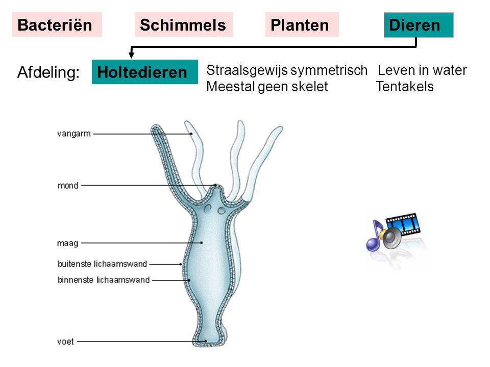 Straalsgewijs symmetrisch Leven in water Meestal geen skelet Tentakels Holtedieren BacteriënSchimmelsPlanten Dieren Afdeling: