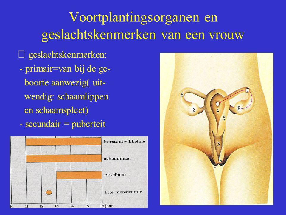 Voortplantingsorganen en geslachtskenmerken van een vrouw  geslachtskenmerken: - primair=van bij de ge- boorte aanwezig( uit- wendig: schaamlippen en