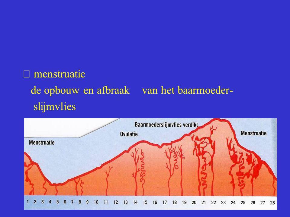 menstruatie de opbouw en afbraak van het baarmoeder- slijmvlies