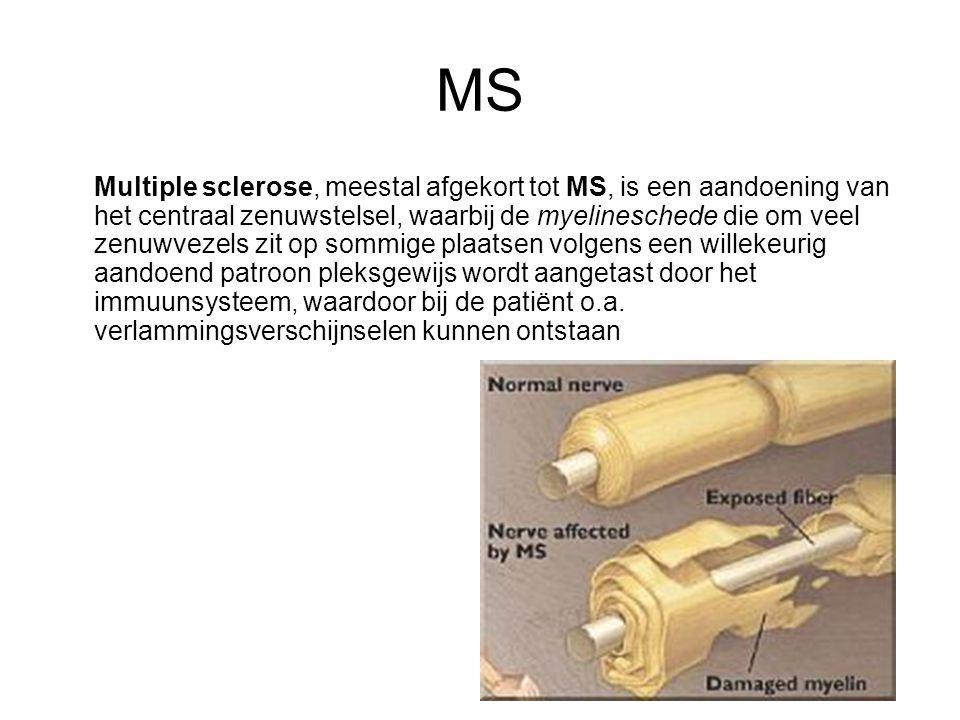 MS Multiple sclerose, meestal afgekort tot MS, is een aandoening van het centraal zenuwstelsel, waarbij de myelineschede die om veel zenuwvezels zit op sommige plaatsen volgens een willekeurig aandoend patroon pleksgewijs wordt aangetast door het immuunsysteem, waardoor bij de patiënt o.a.