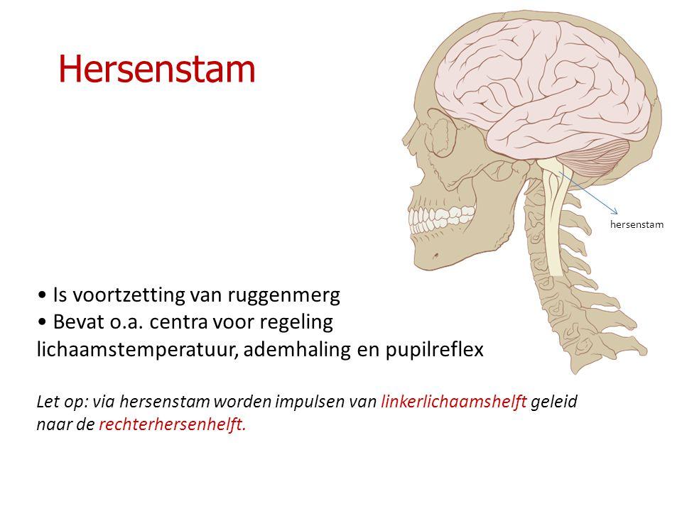Hersenstam Is voortzetting van ruggenmerg Bevat o.a.