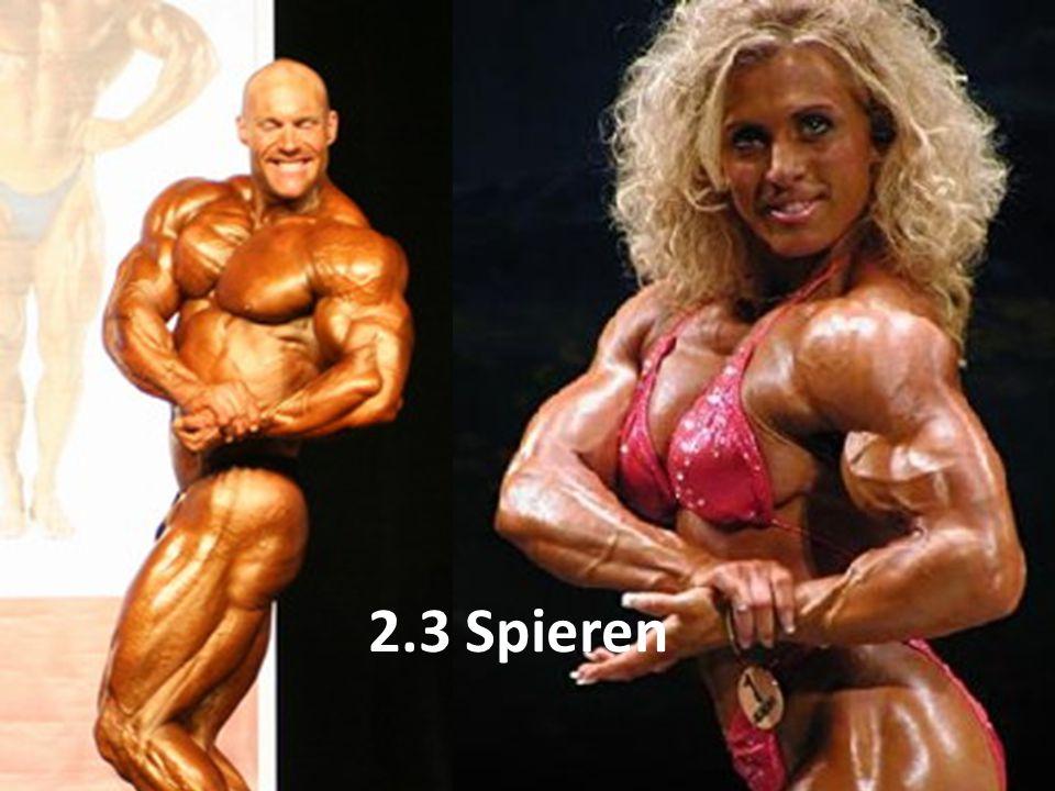 2.3 Spieren