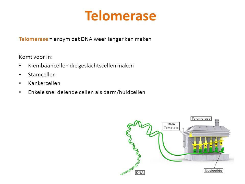 Telomerase Telomerase = enzym dat DNA weer langer kan maken Komt voor in: Kiembaancellen die geslachtscellen maken Stamcellen Kankercellen Enkele snel delende cellen als darm/huidcellen