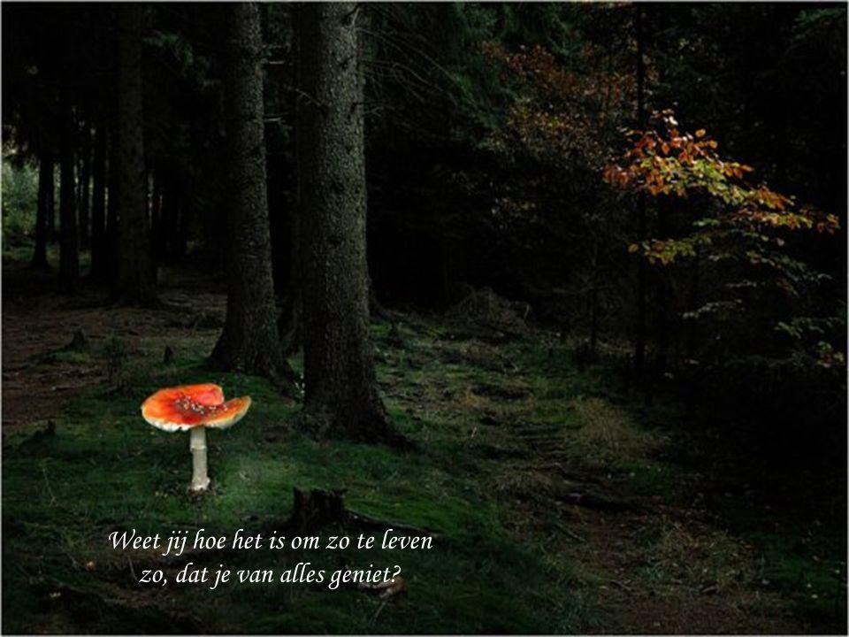 Weet jij hoe het is om in het bos te wandelen.