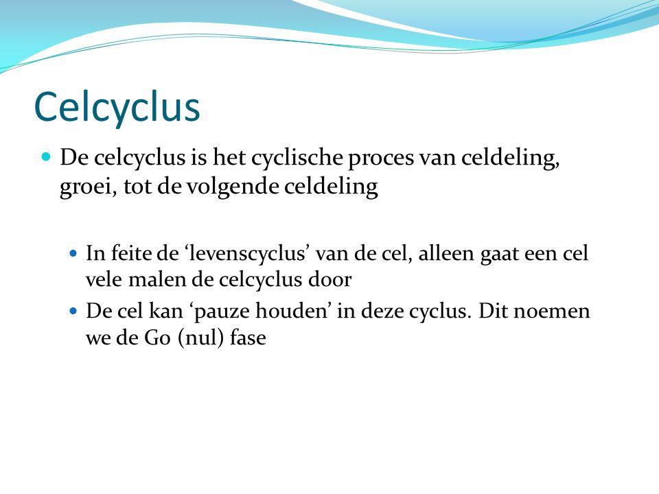 Celcyclus De celcyclus is het cyclische proces van celdeling, groei, tot de volgende celdeling In feite de 'levenscyclus' van de cel, alleen gaat een