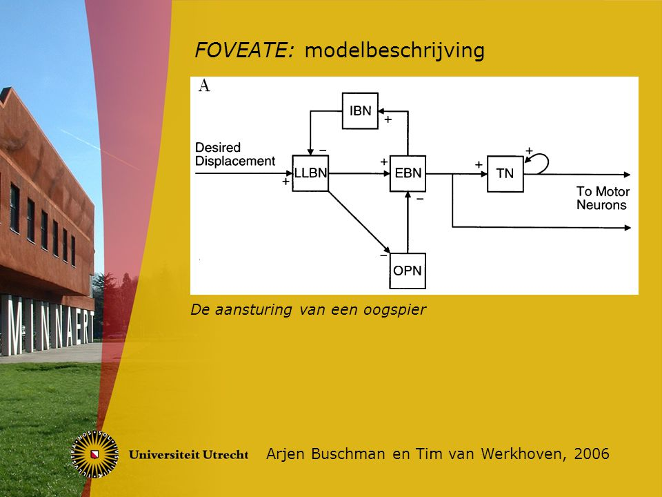 FOVEATE: modelbeschrijving Arjen Buschman en Tim van Werkhoven, 2006 De aansturing van twee oogspieren