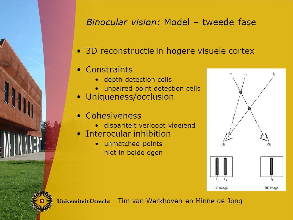3D reconstructie in hogere visuele cortex Constraints depth detection cells unpaired point detection cells Uniqueness/occlusion Cohesiveness dispariteit verloopt vloeiend Interocular inhibition unmatched points niet in beide ogen Binocular vision: Model – tweede fase Tim van Werkhoven en Minne de Jong