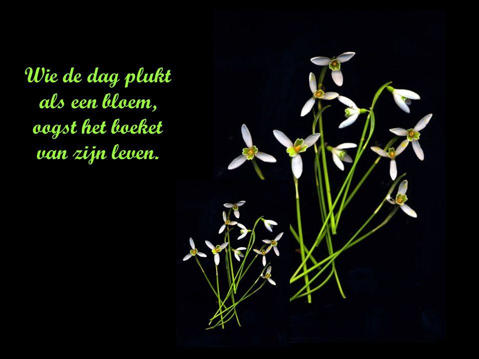 Wacht niet op een rouwkrans om iemand in de bloemetjes te zetten.