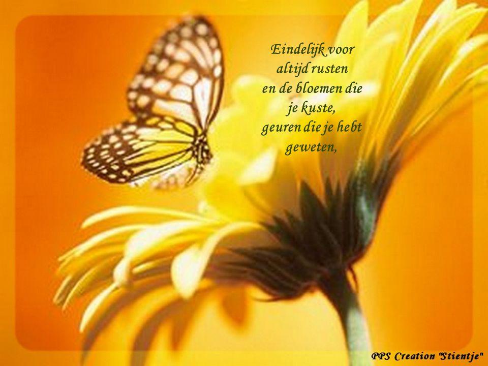 Om te leven hoef ik echt geen vlinder meer te zijn. PPS Creation Stientje 12 juni 2005