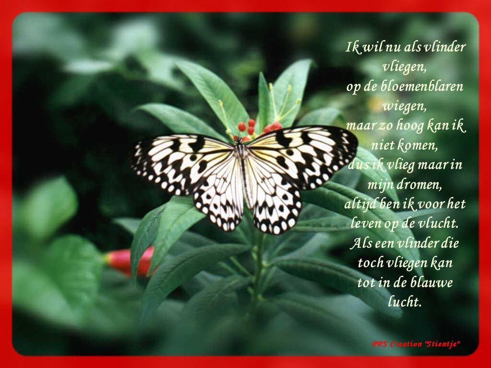 Ik wil nu als vlinder vliegen, op de bloemenblaren wiegen, maar zo hoog kan ik niet komen, dus ik vlieg maar in mijn dromen, altijd ben ik voor het leven op de vlucht.