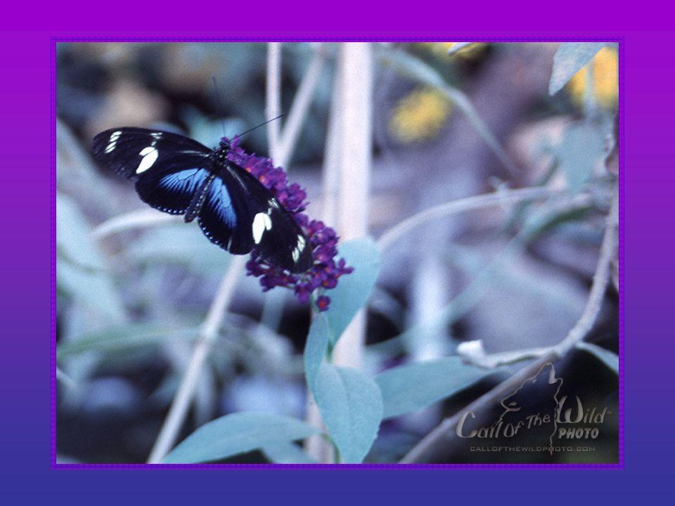 Ik wil nu als vlinder vliegen, op de bloemenblaren wiegen, maar zo hoog kan ik niet komen, dus ik vlieg maar in mijn dromen, altijd ben ik voor het le