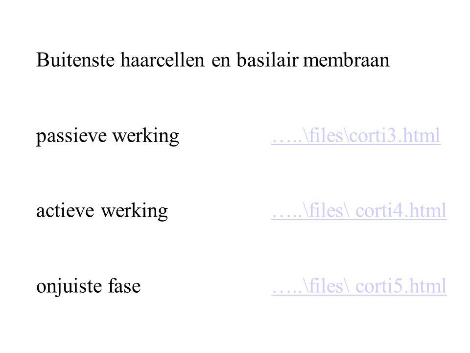 Buitenste haarcellen en basilair membraan passieve werking…..\files\corti3.html actieve werking …..\files\ corti4.html onjuiste fase…..\files\ corti5.html…..\files\corti3.html…..\files\ corti4.html…..\files\ corti5.html