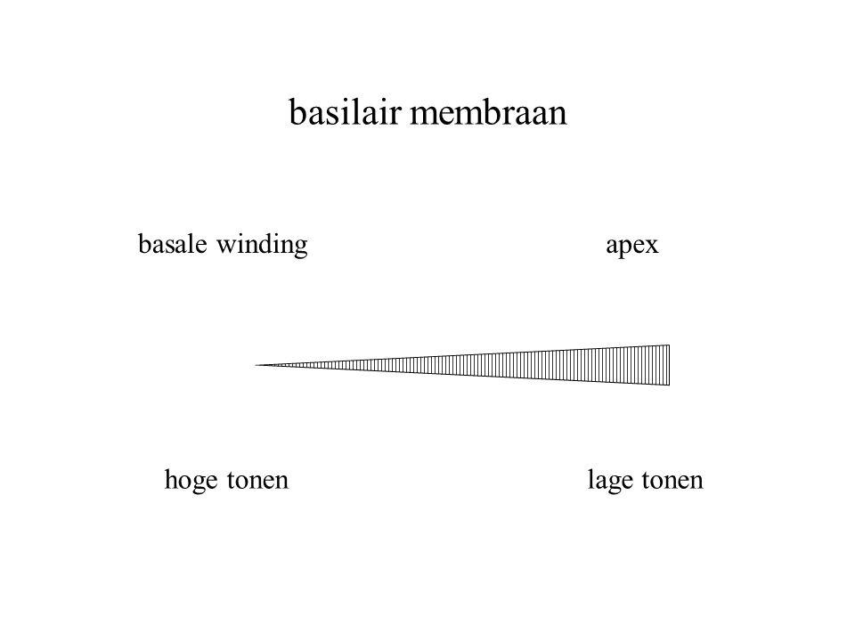 basilair membraan basale winding hoge tonenlage tonen apex