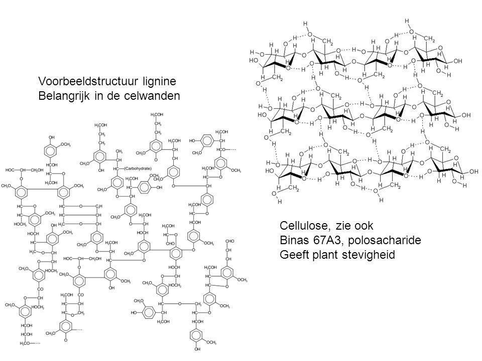 Cellulose, zie ook Binas 67A3, polosacharide Geeft plant stevigheid Voorbeeldstructuur lignine Belangrijk in de celwanden