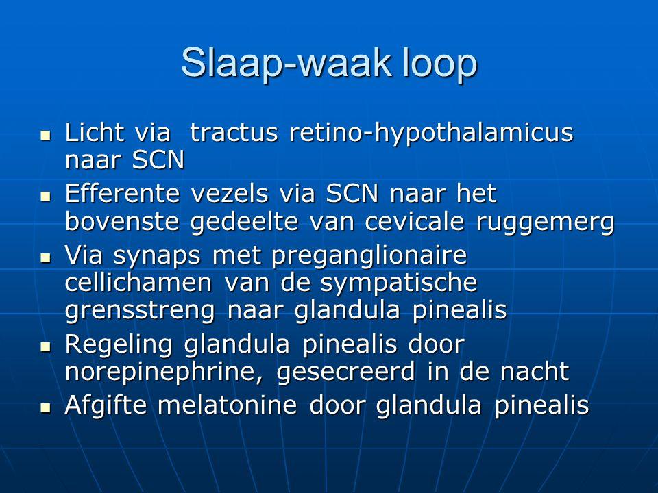 Slaap-waak loop Licht via tractus retino-hypothalamicus naar SCN Licht via tractus retino-hypothalamicus naar SCN Efferente vezels via SCN naar het bo