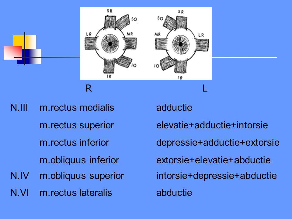 RLRL N.IIIm.rectus medialisadductie m.rectus superiorelevatie+adductie+intorsie m.rectus inferiordepressie+adductie+extorsie m.obliquus inferiorextors
