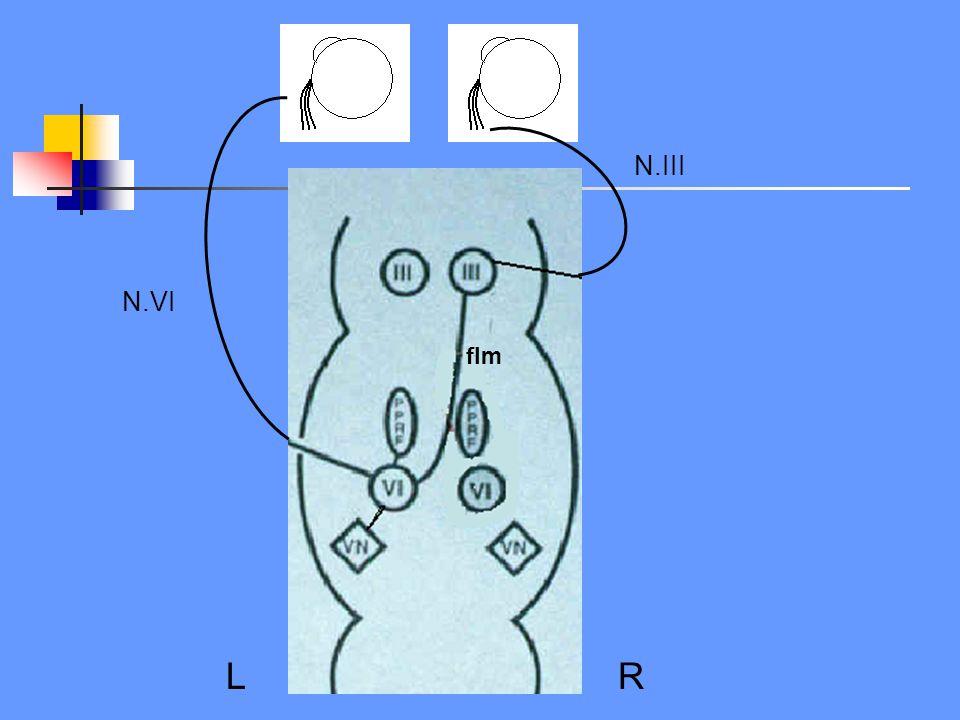 N.III N.VI flm LR