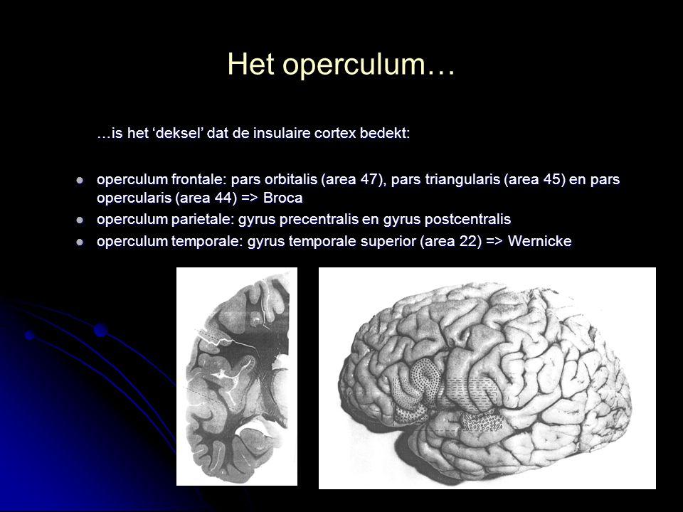 Het operculum… …is het 'deksel' dat de insulaire cortex bedekt: operculum frontale: pars orbitalis (area 47), pars triangularis (area 45) en pars oper