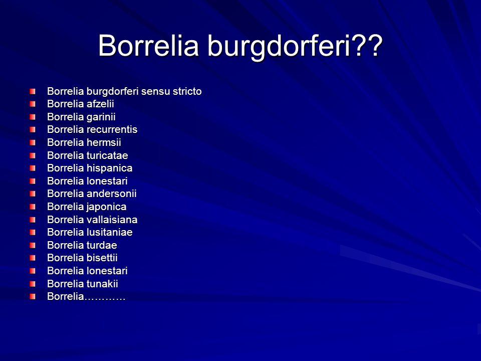 Borrelia burgdorferi?? Borrelia burgdorferi sensu stricto Borrelia afzelii Borrelia garinii Borrelia recurrentis Borrelia hermsii Borrelia turicatae B