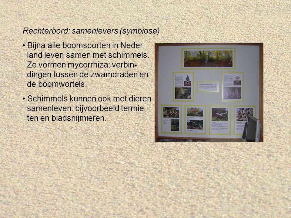 Rechterbord: samenlevers (symbiose) Bijna alle boomsoorten in Neder- land leven samen met schimmels.