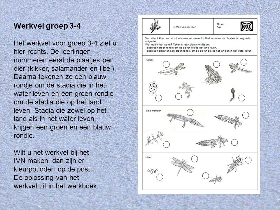 Werkvel groep 3-4 Het werkvel voor groep 3-4 ziet u hier rechts. De leerlingen nummeren eerst de plaatjes per dier (kikker, salamander en libel). Daar