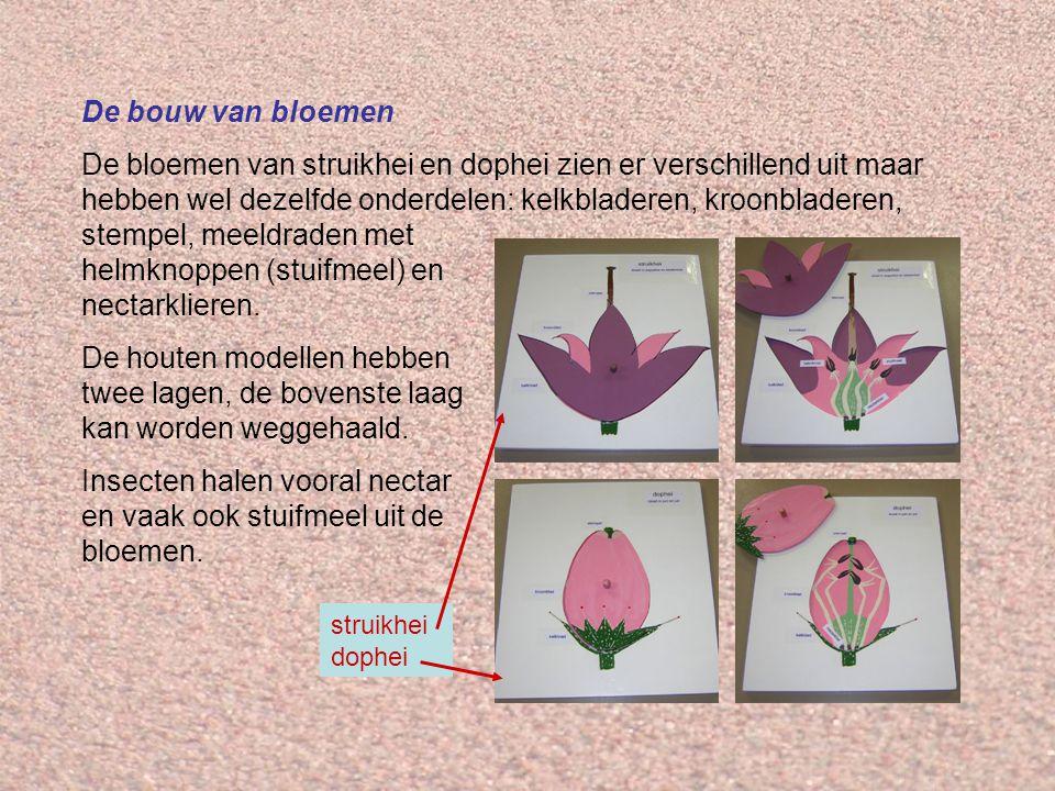De bouw van bloemen De bloemen van struikhei en dophei zien er verschillend uit maar hebben wel dezelfde onderdelen: kelkbladeren, kroonbladeren, stempel, meeldraden met helmknoppen (stuifmeel) en nectarklieren.