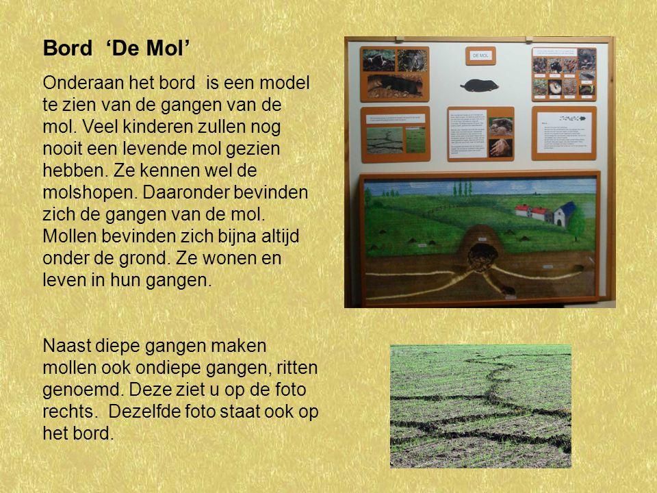 De gangen van de mol hebben een doorsnede van 4 tot 5 centimeter.