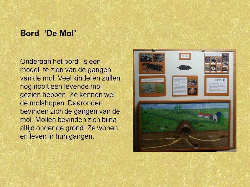 Bord 'De Mol' Onderaan het bord is een model te zien van de gangen van de mol. Veel kinderen zullen nog nooit een levende mol gezien hebben. Ze kennen