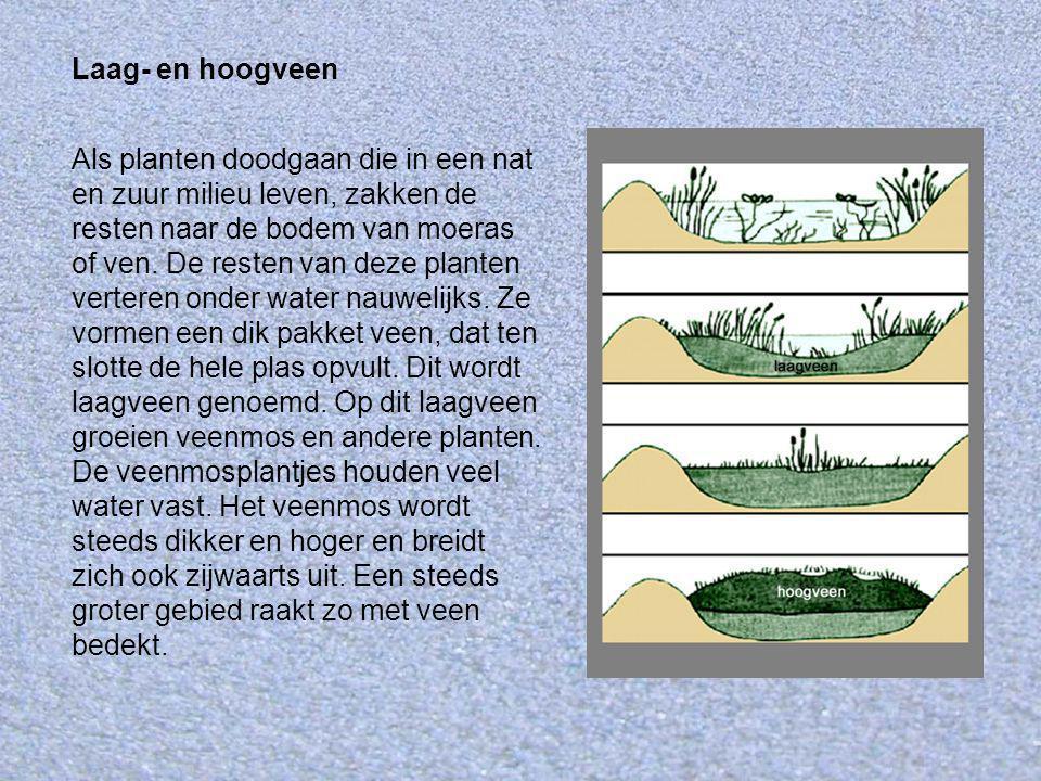 Laag- en hoogveen Als planten doodgaan die in een nat en zuur milieu leven, zakken de resten naar de bodem van moeras of ven. De resten van deze plant