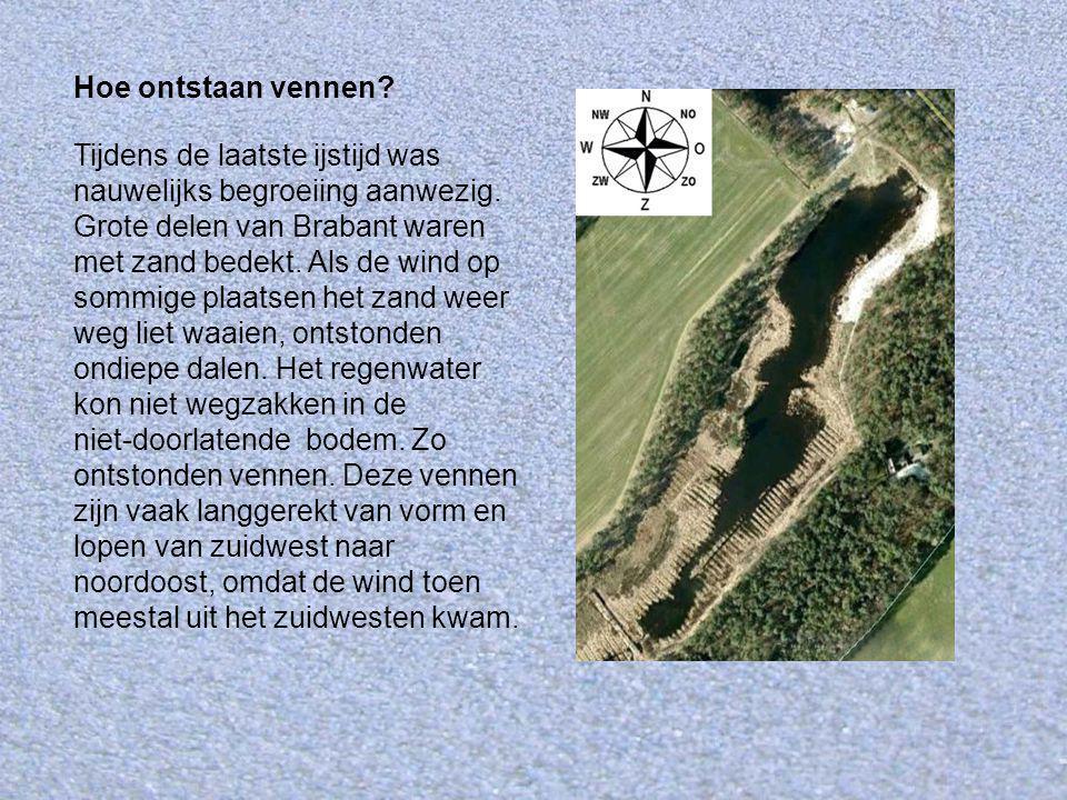 Tijdens de laatste ijstijd was nauwelijks begroeiing aanwezig. Grote delen van Brabant waren met zand bedekt. Als de wind op sommige plaatsen het zand