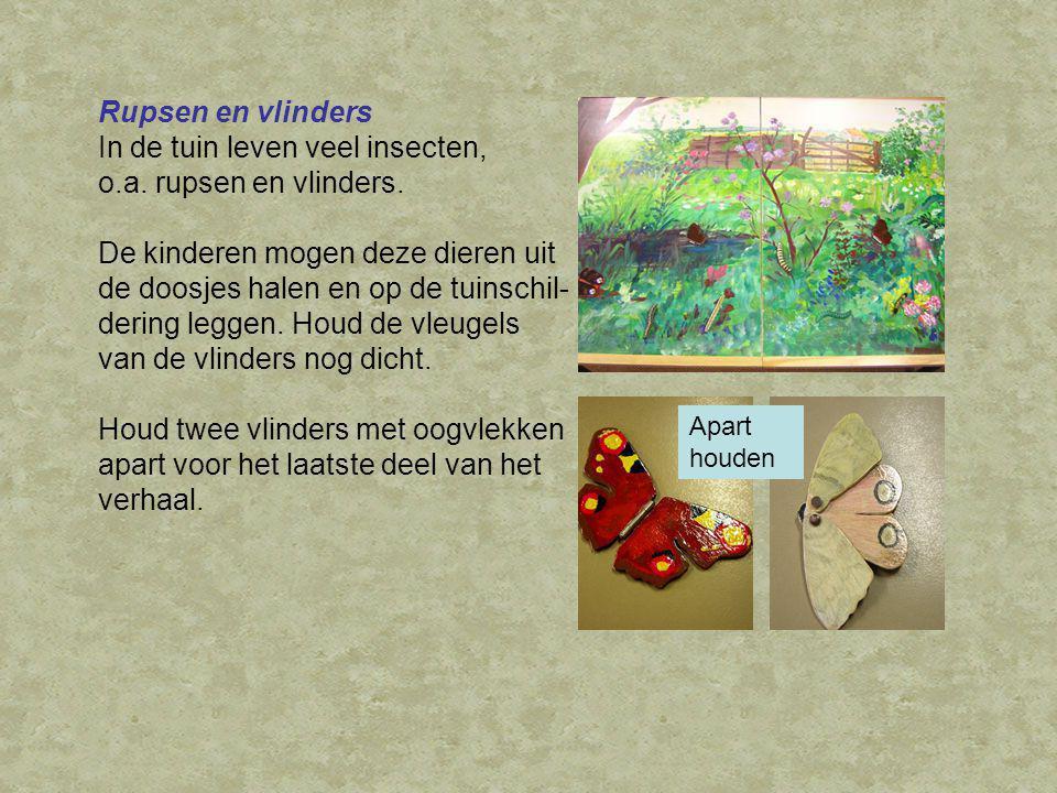 Rupsen en vlinders In de tuin leven veel insecten, o.a.
