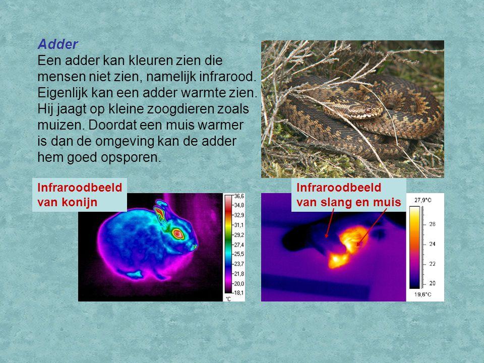 Adder Een adder kan kleuren zien die mensen niet zien, namelijk infrarood. Eigenlijk kan een adder warmte zien. Hij jaagt op kleine zoogdieren zoals m