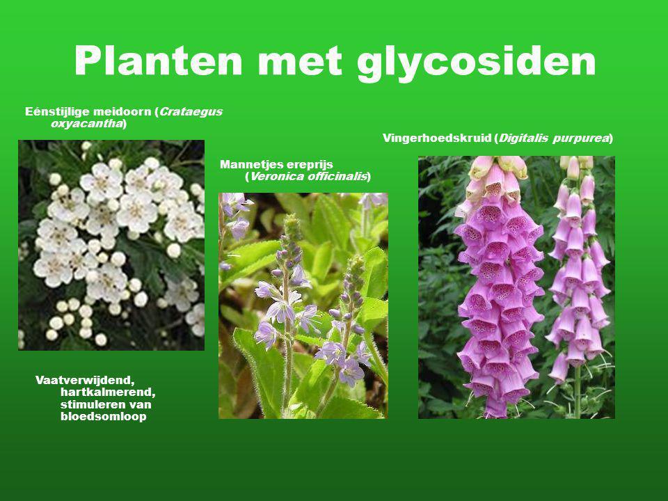 Planten met glycosiden Vingerhoedskruid (Digitalis purpurea) Mannetjes ereprijs (Veronica officinalis) Eénstijlige meidoorn (Crataegus oxyacantha) Vaatverwijdend, hartkalmerend, stimuleren van bloedsomloop